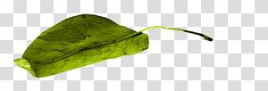 Vegetable Leaf, vegetable PNG clipart