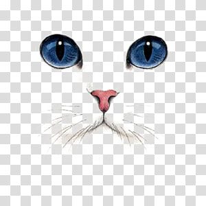 British Shorthair Kitten Dog Tabby cat, Hand Painted Cat, blue-eyed cat illustration PNG