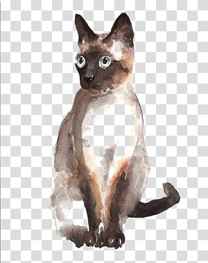 Siamese cat German Rex Tonkinese cat Burmese cat Devon Rex, Hand-painted watercolor cat PNG