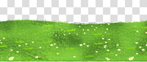 Lawn Grasses , Grass Ground with Daisies , bed of daisy illustration PNG