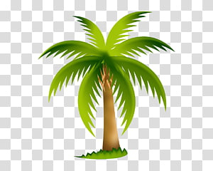 Computer Icons Arecaceae , palm tree PNG clipart