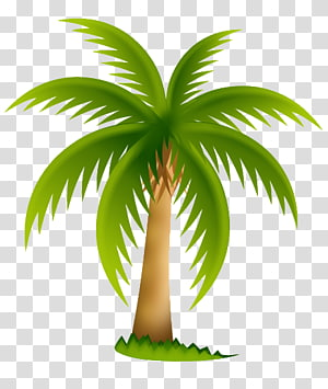Date palm Arecaceae Tree , PALMERA PNG clipart