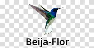 Fauna Feather Beak Wildlife, beija flor PNG