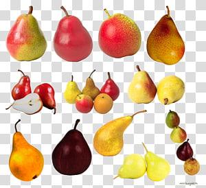 European pear Fruit , Pears PNG clipart