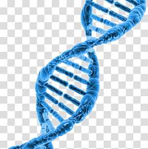 Surname DNA project Cell Hair loss Genome PNG clipart