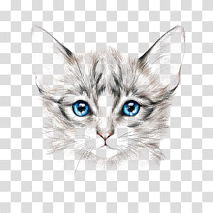 gray and white kitten illustration, Cat Drawing Painting Art, painted cat PNG