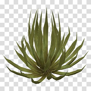 Deserts and xeric shrublands Deserts and xeric shrublands Plant, desert PNG clipart