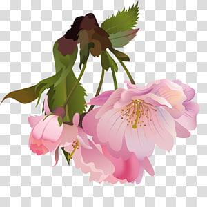 Flower , flower PNG clipart